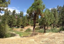 Big Bear Camp - Trail